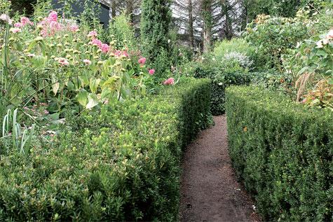 Leikattu puksipuuaita johdattaa kulkua ja muovaa istutusalueita suojaisiksi.