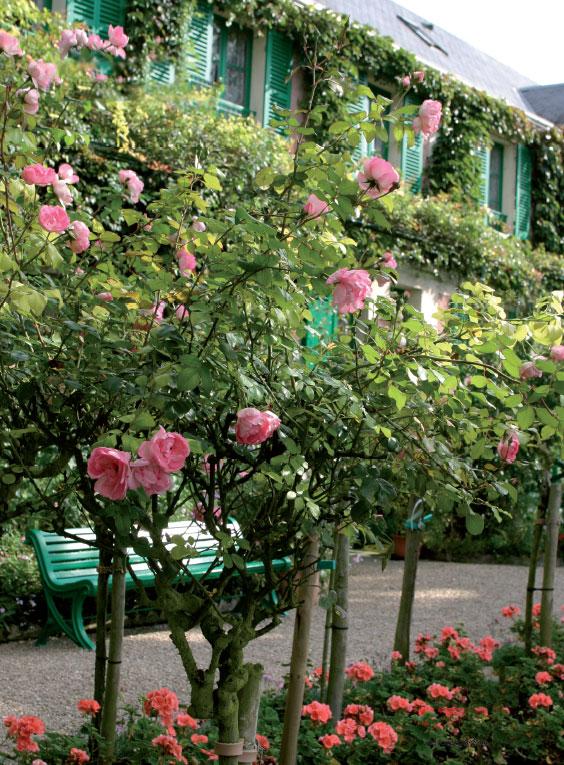 Runkoruusut ja pelargonit pitävät talon edustan kukkaisana koko kesän.