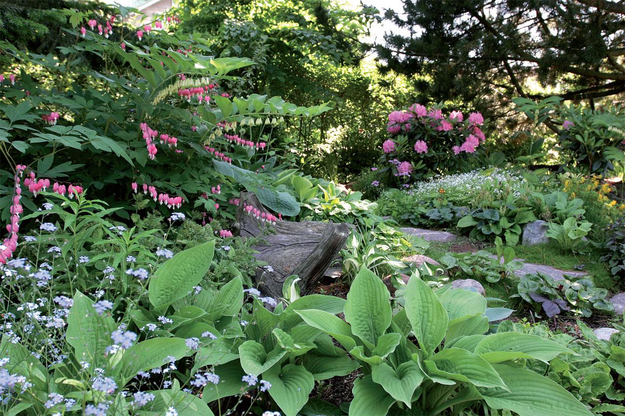 Suuren pihdan ja sembramännyn välissä on puolivarjoisaa. Särkynytsydän ja tarhakalliokielo kukkivat kuunliljojen ympäröiminä. Taustaa värittää alppiruusu.