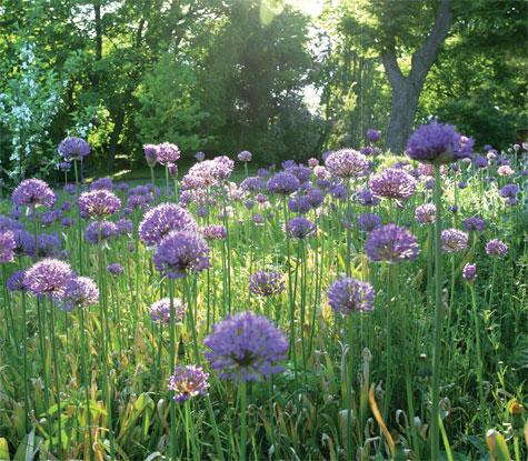 Kukkanurmi, Talvipuutarhan vanhaa ja elinvoimaista kantaa olevat ukkolaukat ovat lisääntyneet siemenistä vuosikymmenten saatossa.