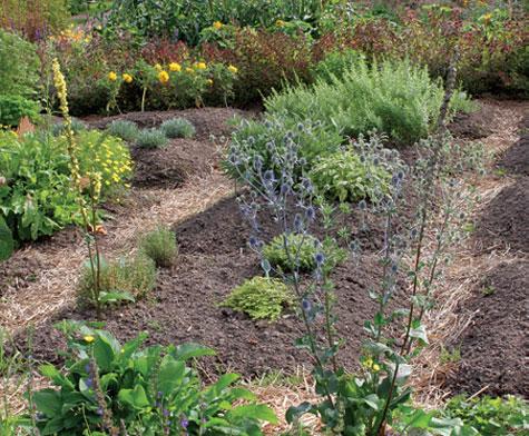 Vaihtele yksivuotisten kasvien paikkoja vuosittain.