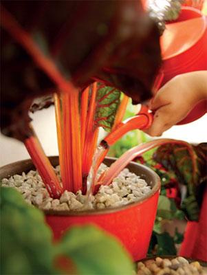 Pienissä ruukuissa olevat kasvit kaipaavat säännöllistä kastelua ja lannoitusta.