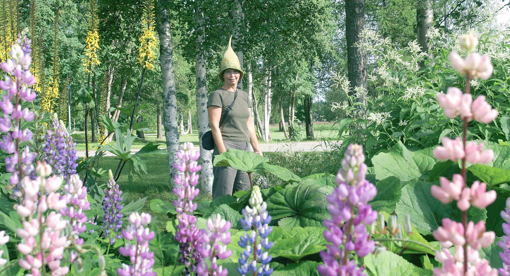Terttu Tuovila tarkastelee perennapenkkiä, jossa kasvaa toistakymmentä suurperennaa, kuten näyttävälehtinen ruttojuuri, vaaleakukkainen röyhytatar ja keltakukkainen valtikkanauhus. Etualalla metrin mittainen komealupiini (Lupinus polyphyllos).