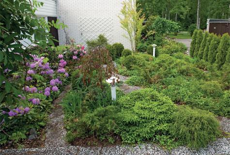 Paahteisen pihan etualalla kasvaa sinikataja, tapionpöytä, hernesypressi ja pieni riippaoksainen koristeomenapuu. Kartiotuijat on sijoitettu aidaksi.