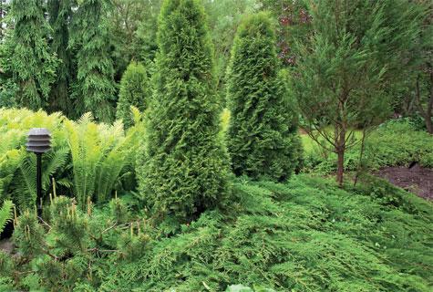 Havukasvit selviävät vähällä hoidolla, kun kasvupaikka on kunnossa. Kauttaaltaan vihreä istutus koostuu kartiotuijien ja kynäkatajien lisäksi kotkansiivistä ja tuivioista.