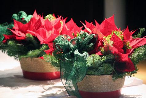 Kaunis joulutähtiasetelma on floristihortonomi Jouni Seppäsen tekemä