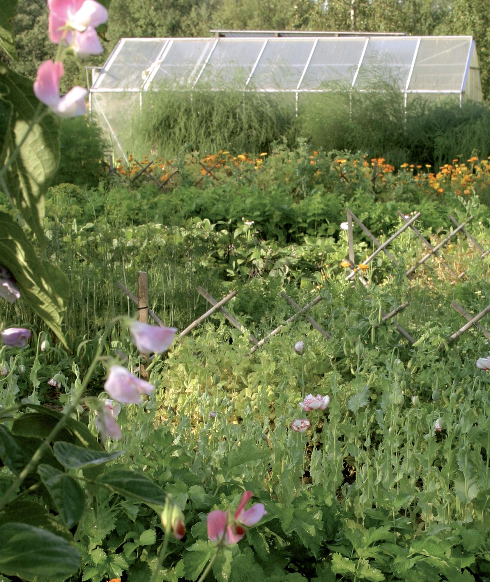 Esteettisyyttä arvostavalle Virpille kasvimaa on puutarhan helmi.