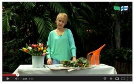 Tulppaanin hoito-ohjeet videolla