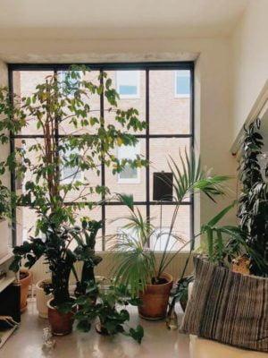 Huonekasvien tuholaiset ovat ikävä riesa
