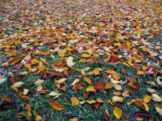 Lokakuun pihatyöt, syksyn lehdet