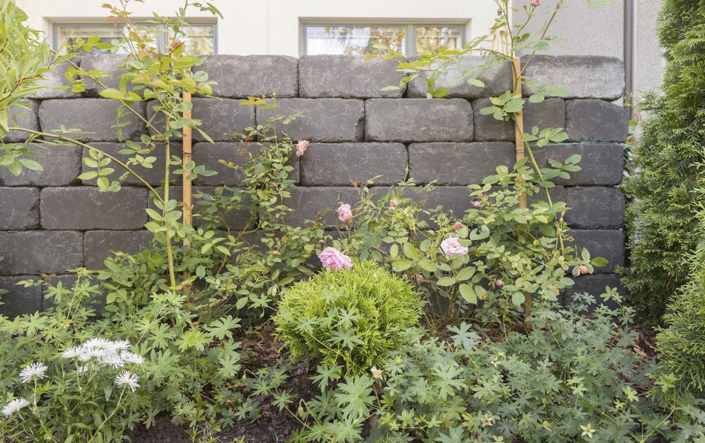 Pihaan valitut ruusulajikkeet ovat John Davis, New Dawn ja Sommerwind.