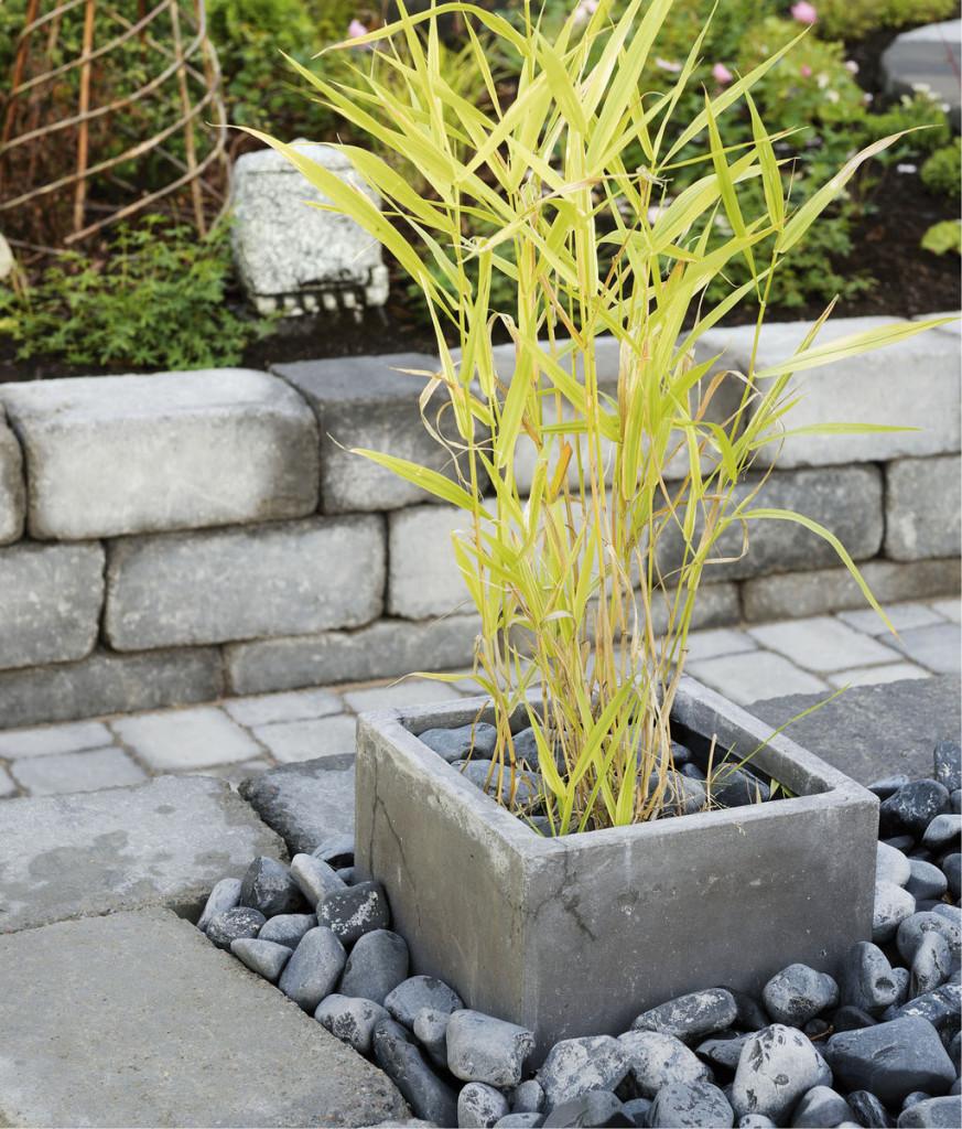 Heinien kasvua voi hillitä istuttamalla ne altaisiin, jotka tuovat samalla vaihtelua istutusalueeseen.