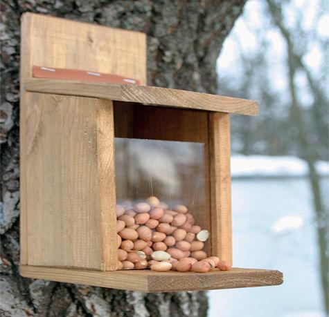 Lintujen talviruokinta. oravanruokalaatikko