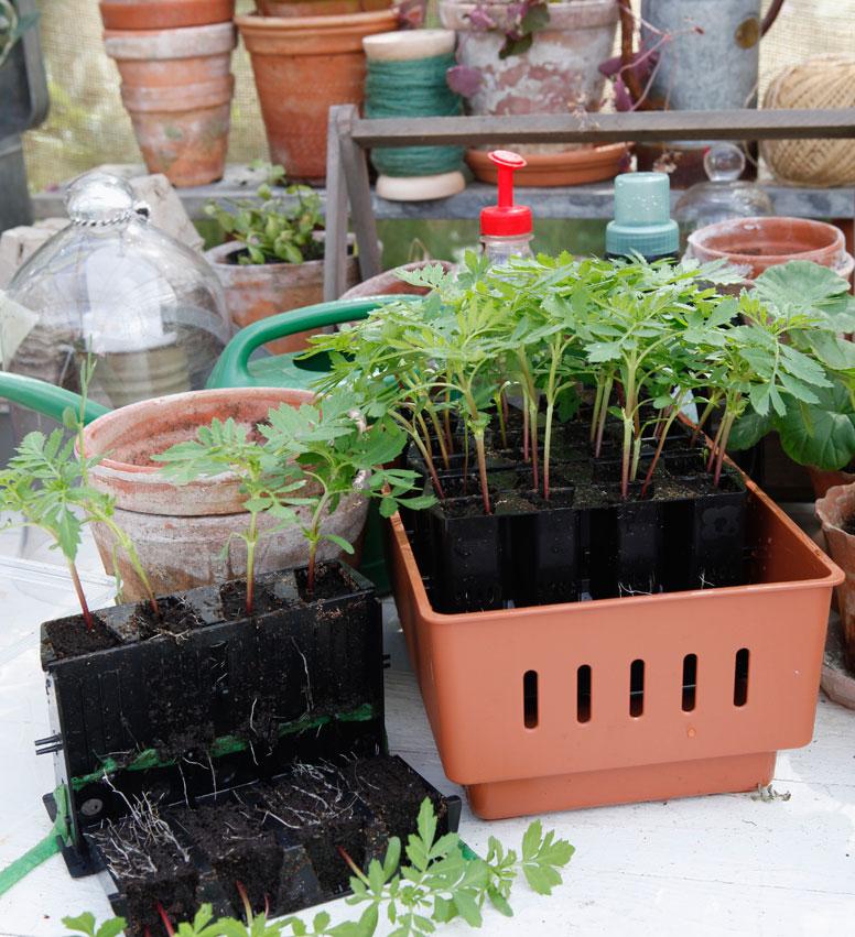 minikasvihuone - taimien esikasvatus