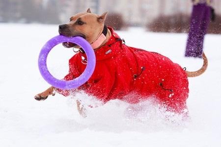 Koiran talvivarusteet - koiran takki