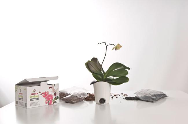 Biolan_orkidea_1