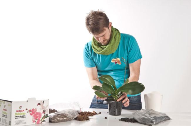 Biolan_orkidea_3