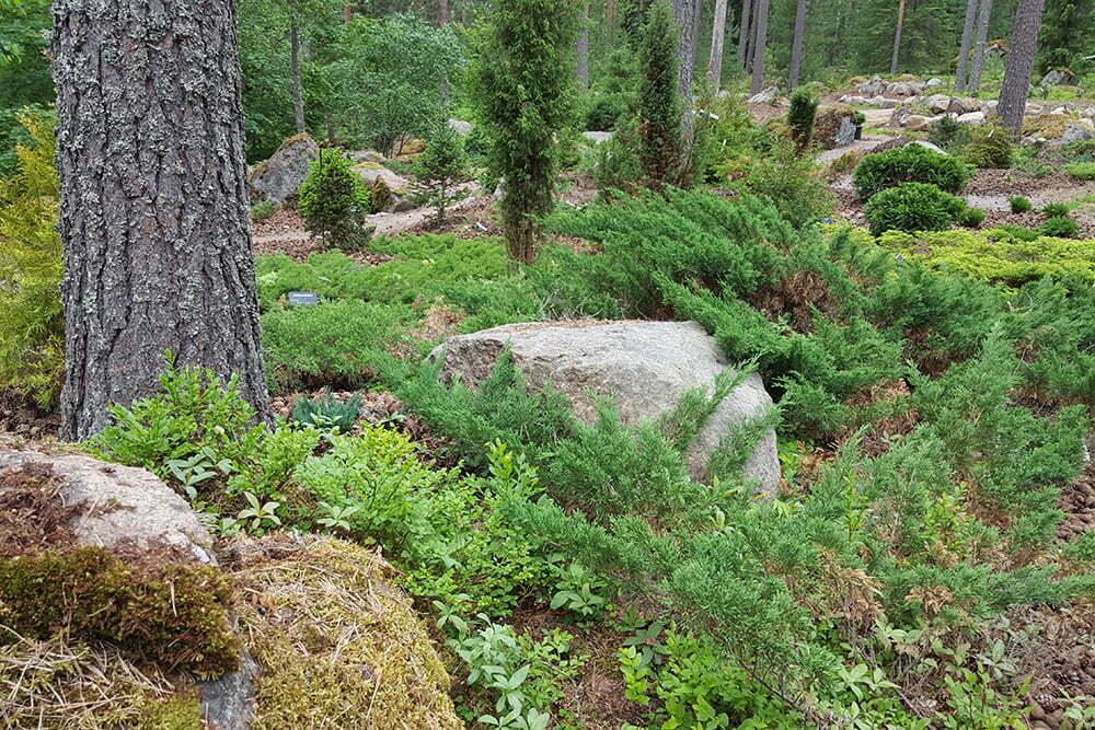 Metsäpuutarha toteutetaan luonnon ehdoilla