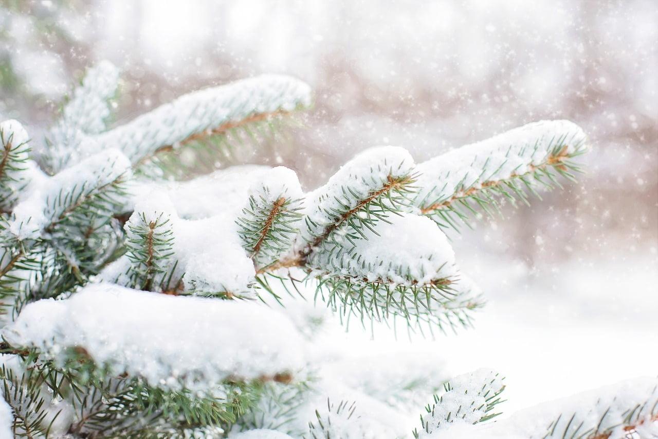 Joulukuusi – vinkit kaatoon ja säilytyksen