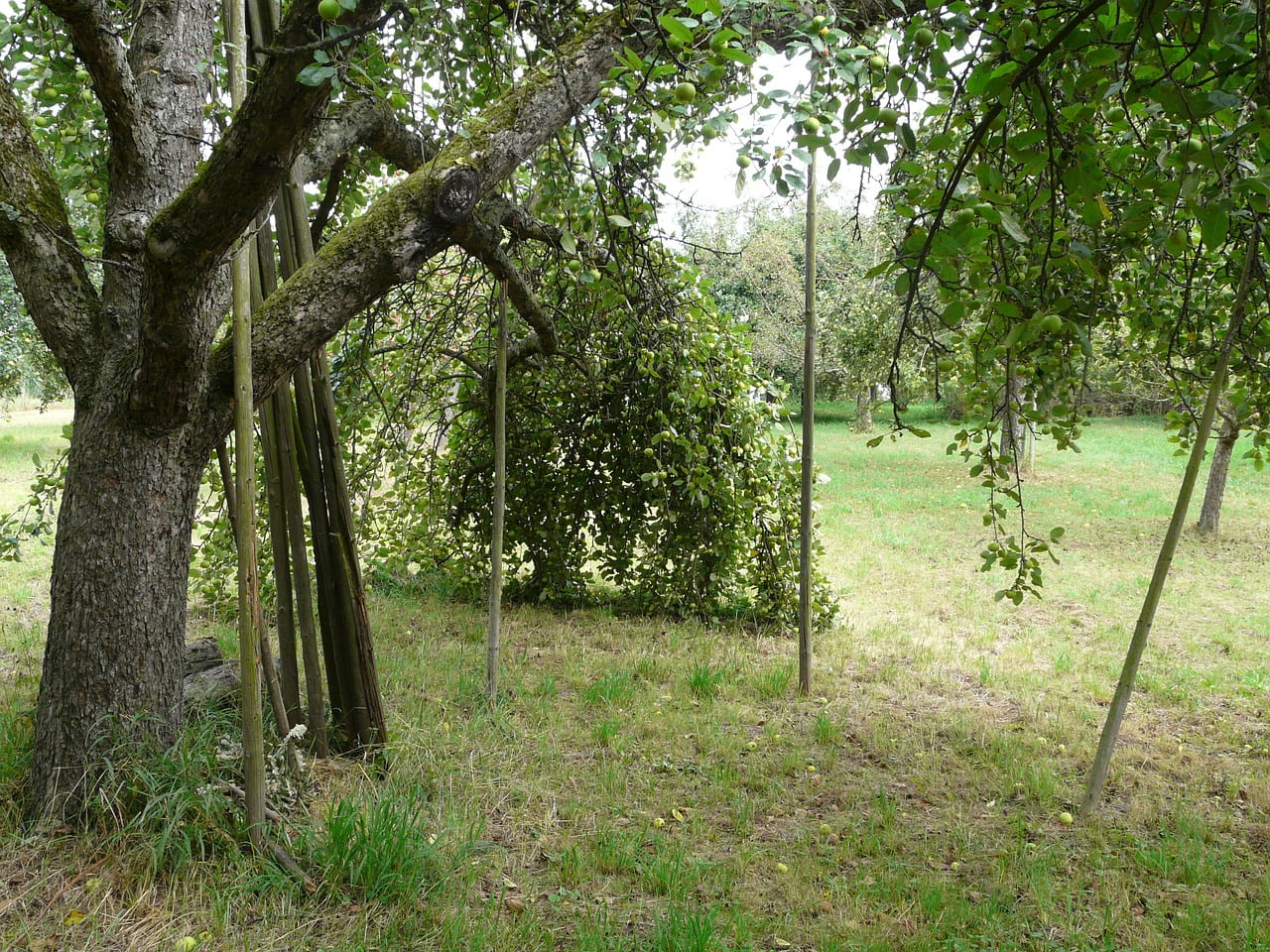 orchard-59919_1280