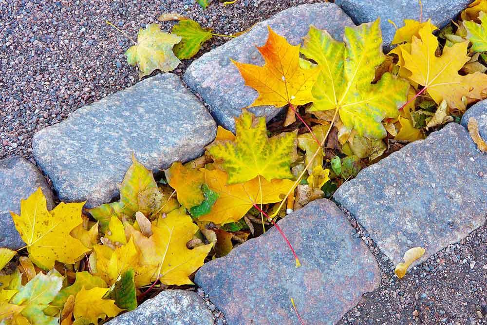 Suojaa rungot – huonekasvit lepoon ja lamppujen alle