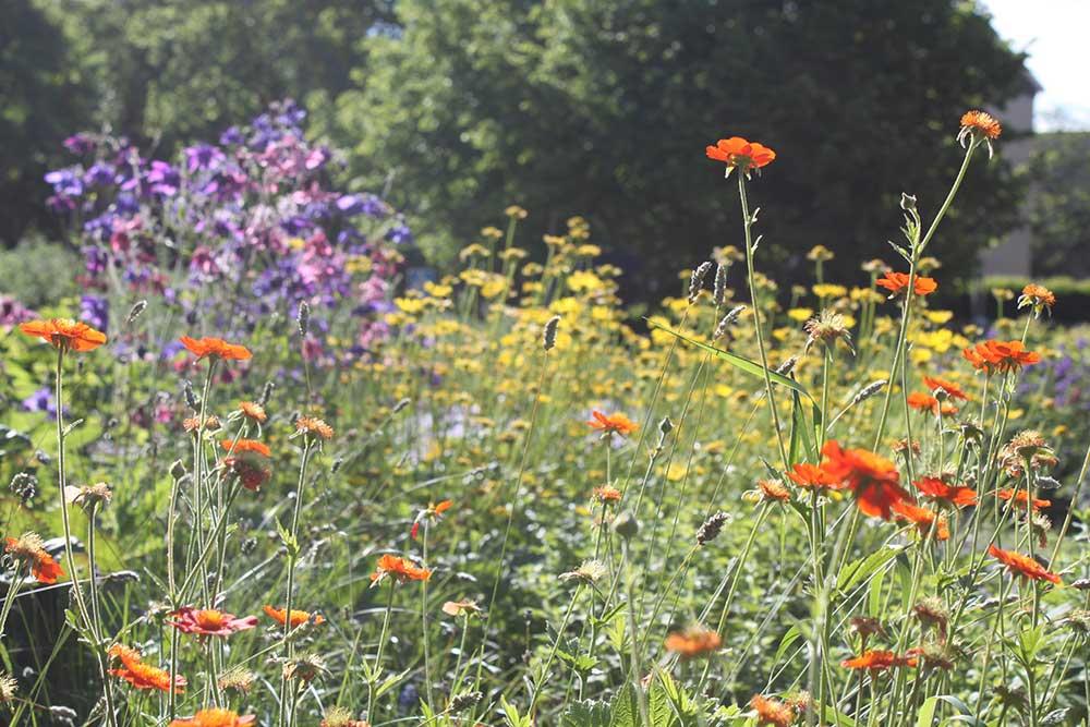 Luonnon monimuotoisuus kotipihassa – näin edistätkestävän ympäristön toteutumistaekologisesti