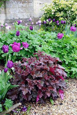 Ota kuva kevään kukkapenkistä