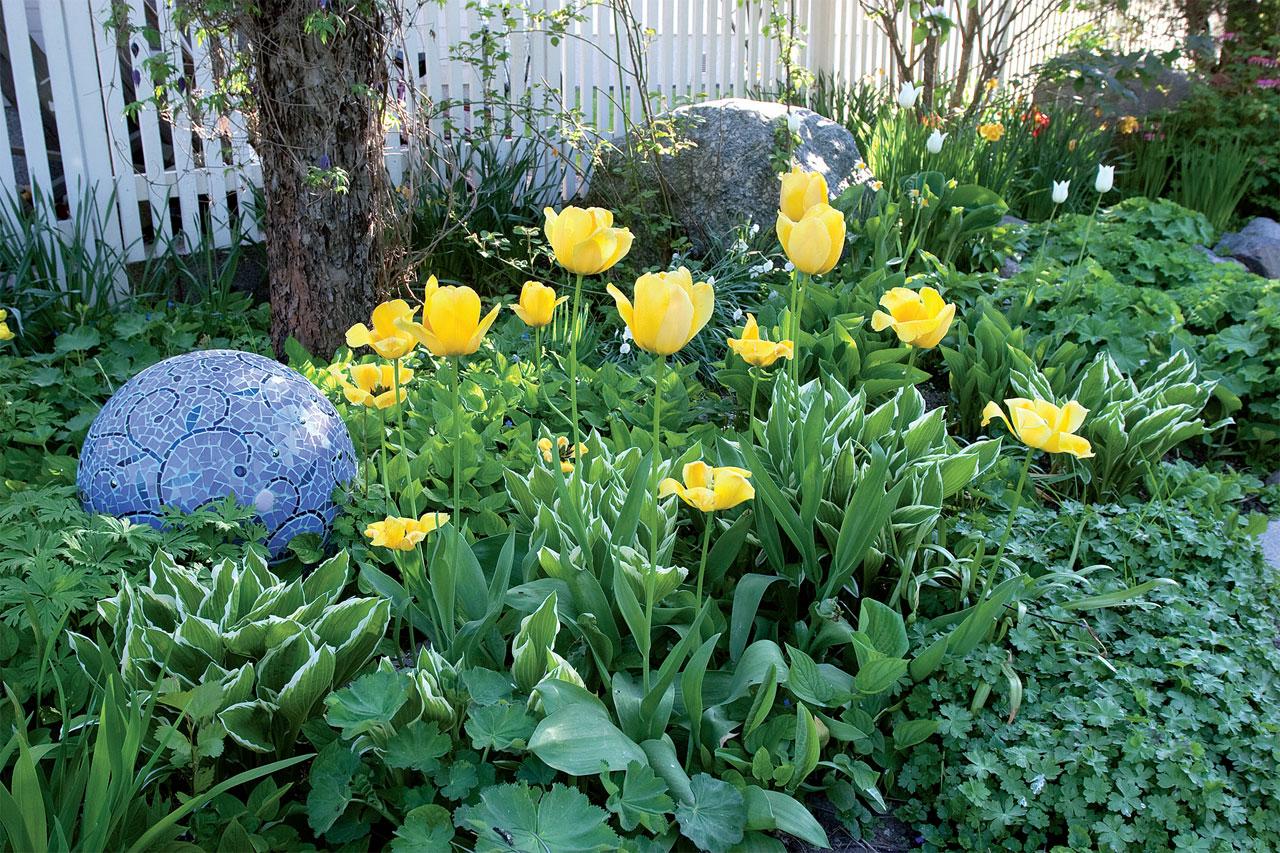 Kerroksellinen, sipulikukilla koristeltu perennapenkki syntyy, kun istutat kymmenkunta sipulia neliölle. Tulppaanit kurottuvat kuunliljojen ja poimulehtien ylle, ja taustalla viheriöi kevätkaihonkukka.