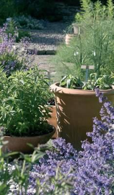 Ruukuissa kasvavat viherminttu ja basilika tarjoavat iloa kaikille aisteille.