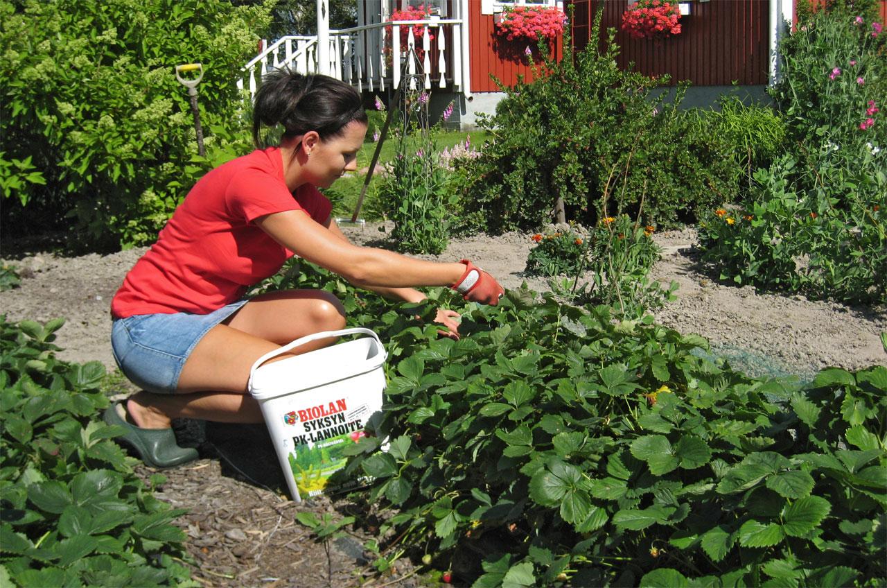 Syyslannoituksen aika on jo elokuussa, kun kasvit ovat vielä kasvussa.