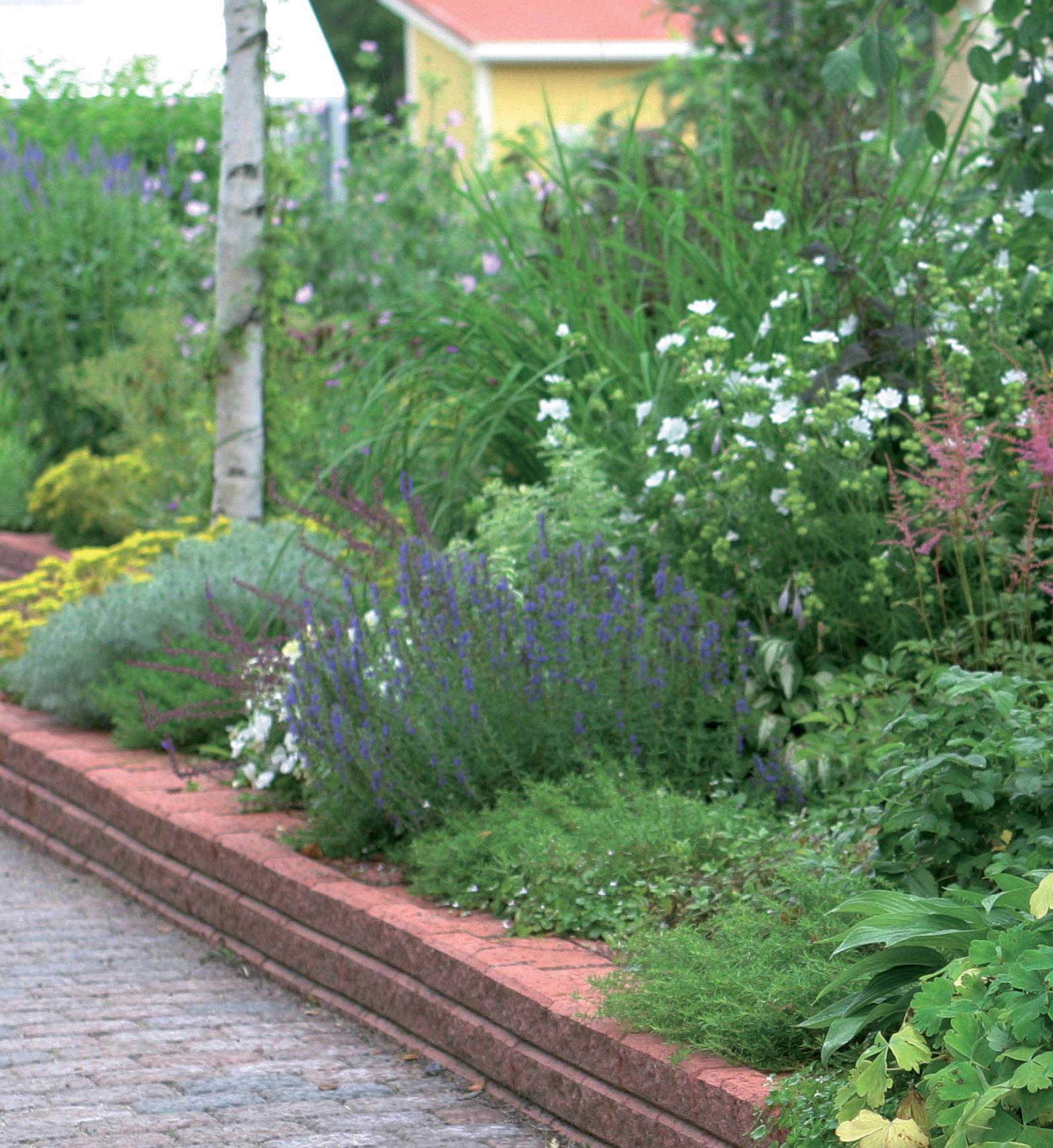 Kun pintamaat poistetaan, puutarhaan saa syvämultaisen, vain hieman ympäristöstään kohoavan kukkapenkin.