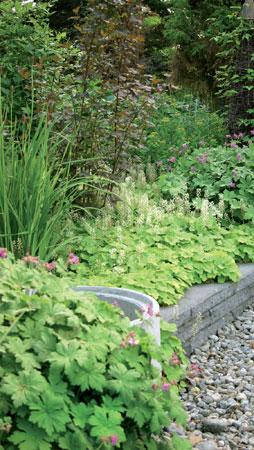 Karmiininpunakukkainen tuoksukurjenpolvi ja rönsytiarella kukkivat samoihin aikoihin kesäkuussa.
