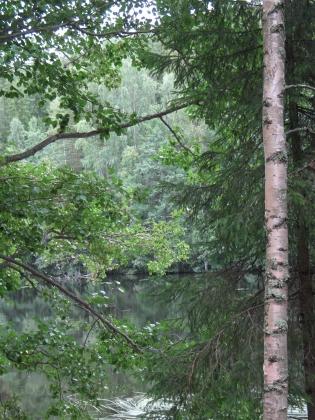 Suojeltua metsää Heinolassa.