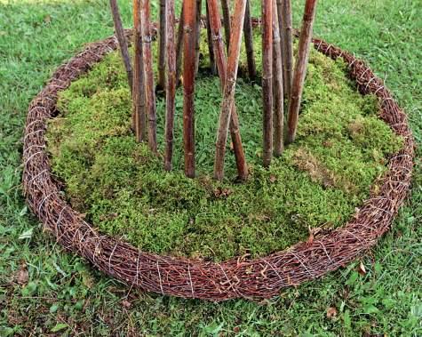 Koivukranssin sisältä kohoavat japanintattaren varret Raija on kerännyt keväällä.