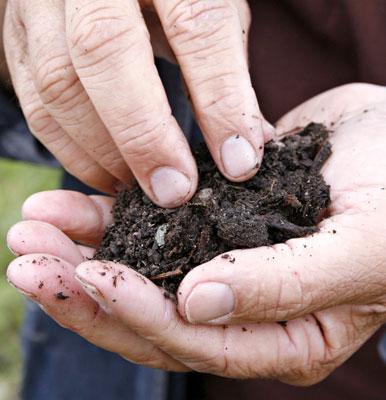 Kompostimullassa on runsaasti mikro-organismeja, ja se toimiikin varsinaisena puutarhan maanparannusaineena.