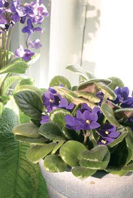 Trendikkäät huonekasvit tuovat tunnelmaa kotiin