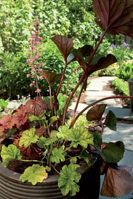 Puolivarjon siimeksessä viihtyvät ohut- ja melko suurilehtiset kasvit, jotka auringossa alkavat helposti nuokkua.