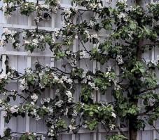 Omenapuun istutus - Snygg
