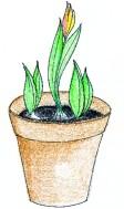 Taimikasvattajan kausi alkaa maaliskuussa