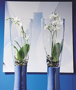 Tietynvärinen kasvi oikeassa ympäristössä täydentää sisustusta.