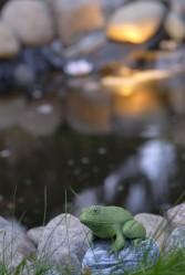 Jokaisessa kunnon lammessa on vähintään yksi sammakko.