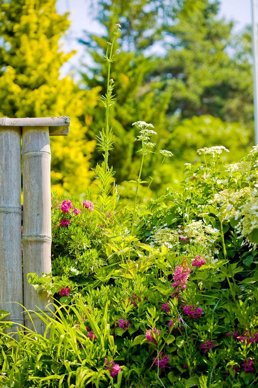 Bambuaidan ympärillä kukkii värikäs kukkaketo.
