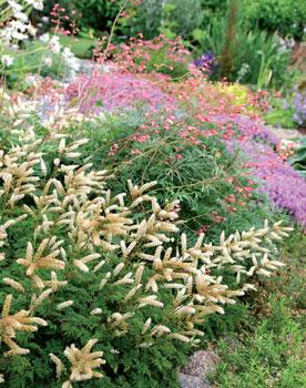 Matala pikkutöyhtöangervo, keijunkukka, sammalleimu ja taaempana kukkiva liila ajuruoho muodostavat kivikkoon pitkään kukkivan, yhtenäisen kasvimaton.