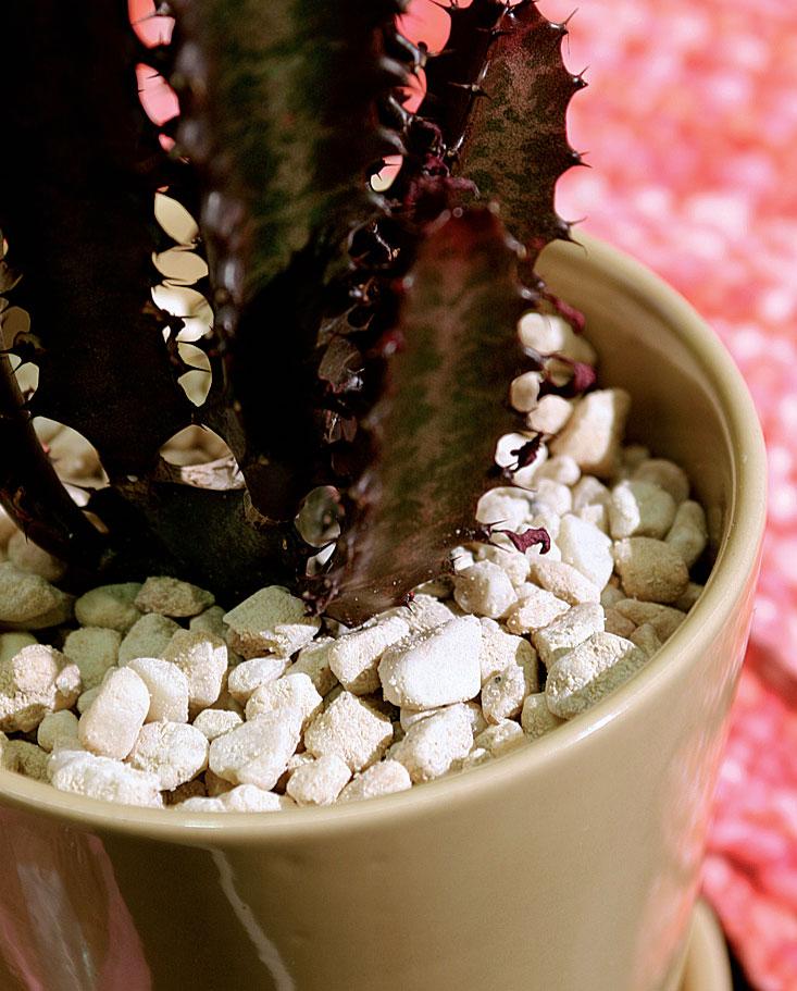 Valkoinen sora ja tumma tyräkkikaktus antavat potkua beigelle ruukulle.