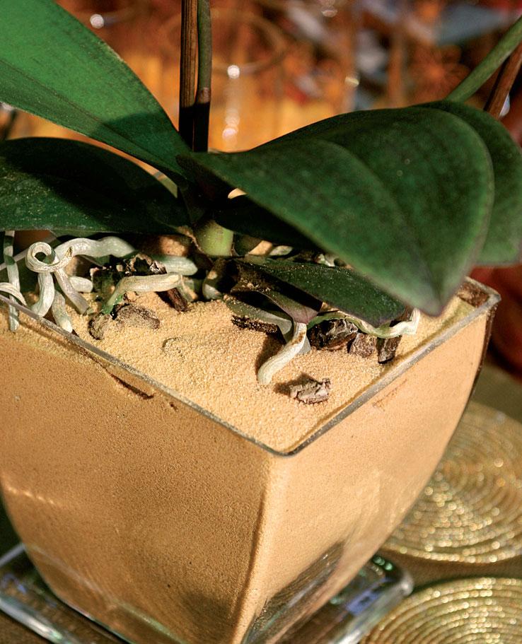 Hiekkaistutus on hauska mullan korvike kausikukkana käytettävälle orkidealle, jonka kastelu hoituu säännöllisillä suihkutuksilla.