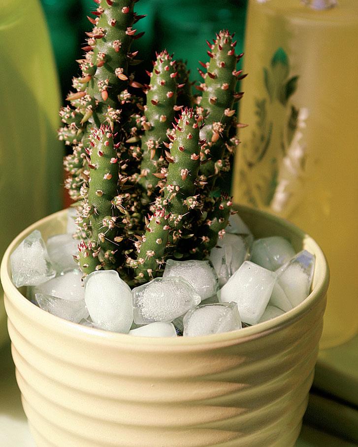 Jääkuutioita muistuttavien muovipalasten välistä vesi sujahtaa kaktuksen juurelle.