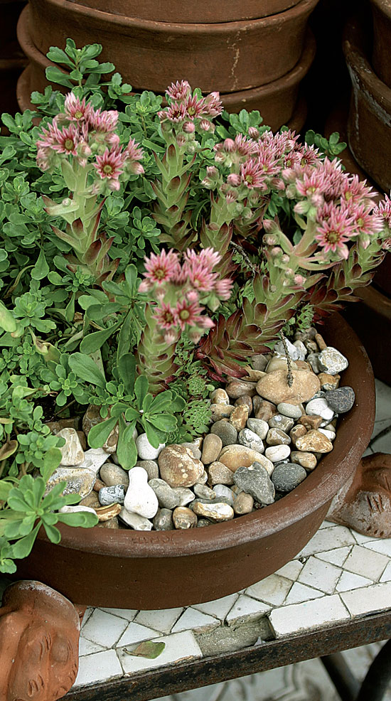 Oman puutarhan voit luoda vaikka parvekkeen pöydälle matalajuurisilla maanpeitekasveilla ja mehitähdillä.