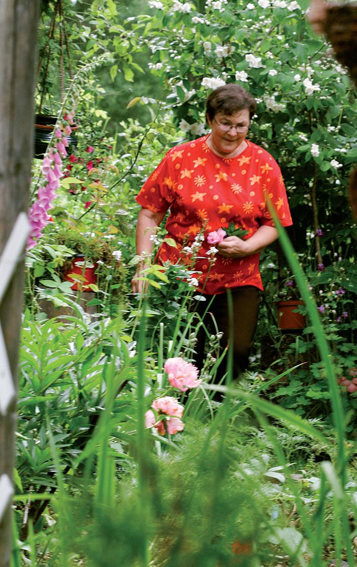 Polun varrelta Pirkko Kaasinen poimii maljakkoon tuoreita kukkia. Taustalla kukassa pihajasmike, etualalla korkea sormustinkukka ja pioni.