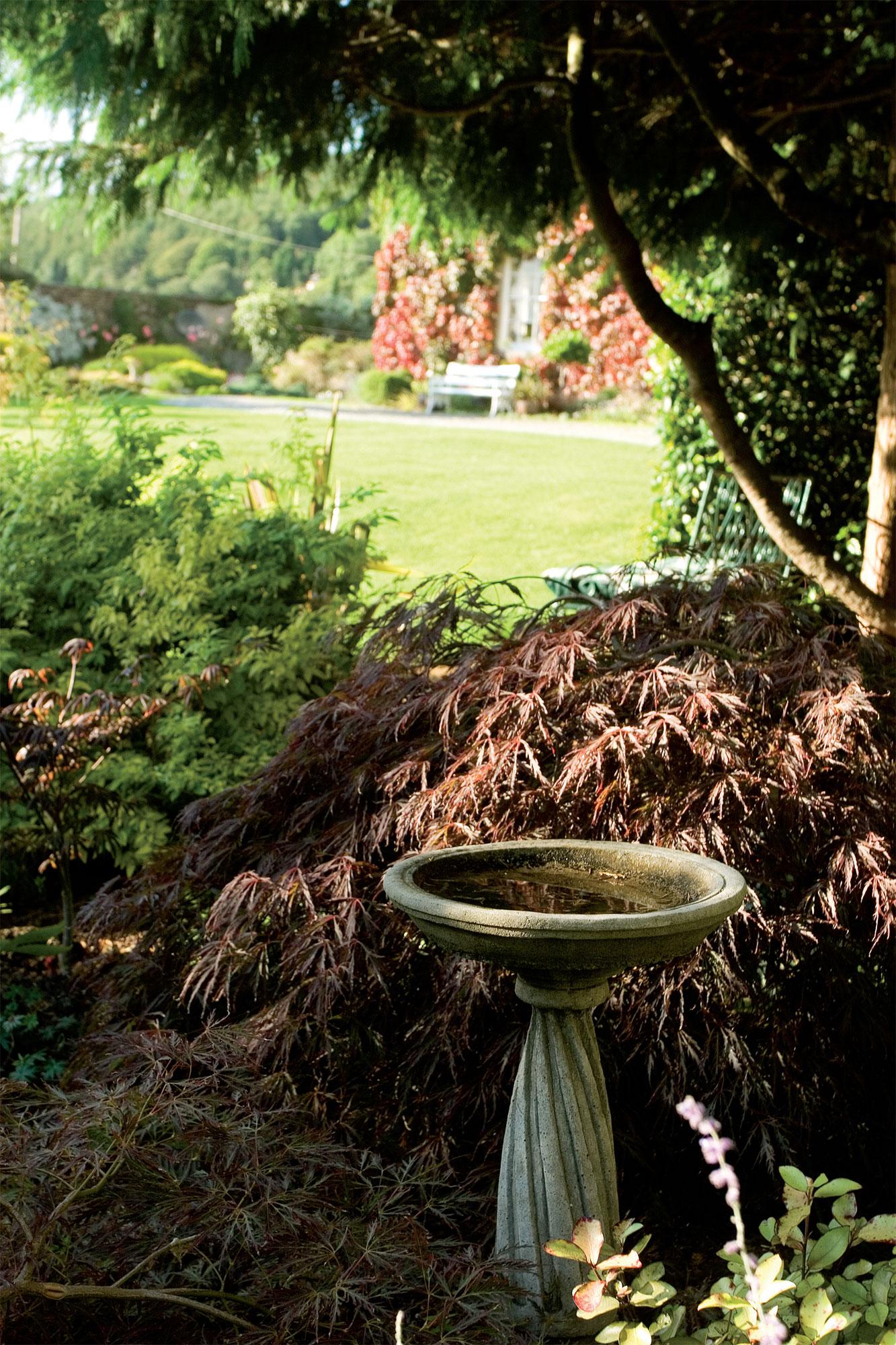 Vastakohdat täydentävät toisiaan. Vaalea korkea vesiuurna erottuu hyvin lamoavakasvuisen, korkeuttaan leveämmän syvänpunaisen japaninvaahteran (Acer palmatum 'Chitoseyama') edessä. Tiiviin kasvillisuuden seasta aukeava kurkistusaukko tarjoaa myös valon ja varjon välistä leikittelyä.