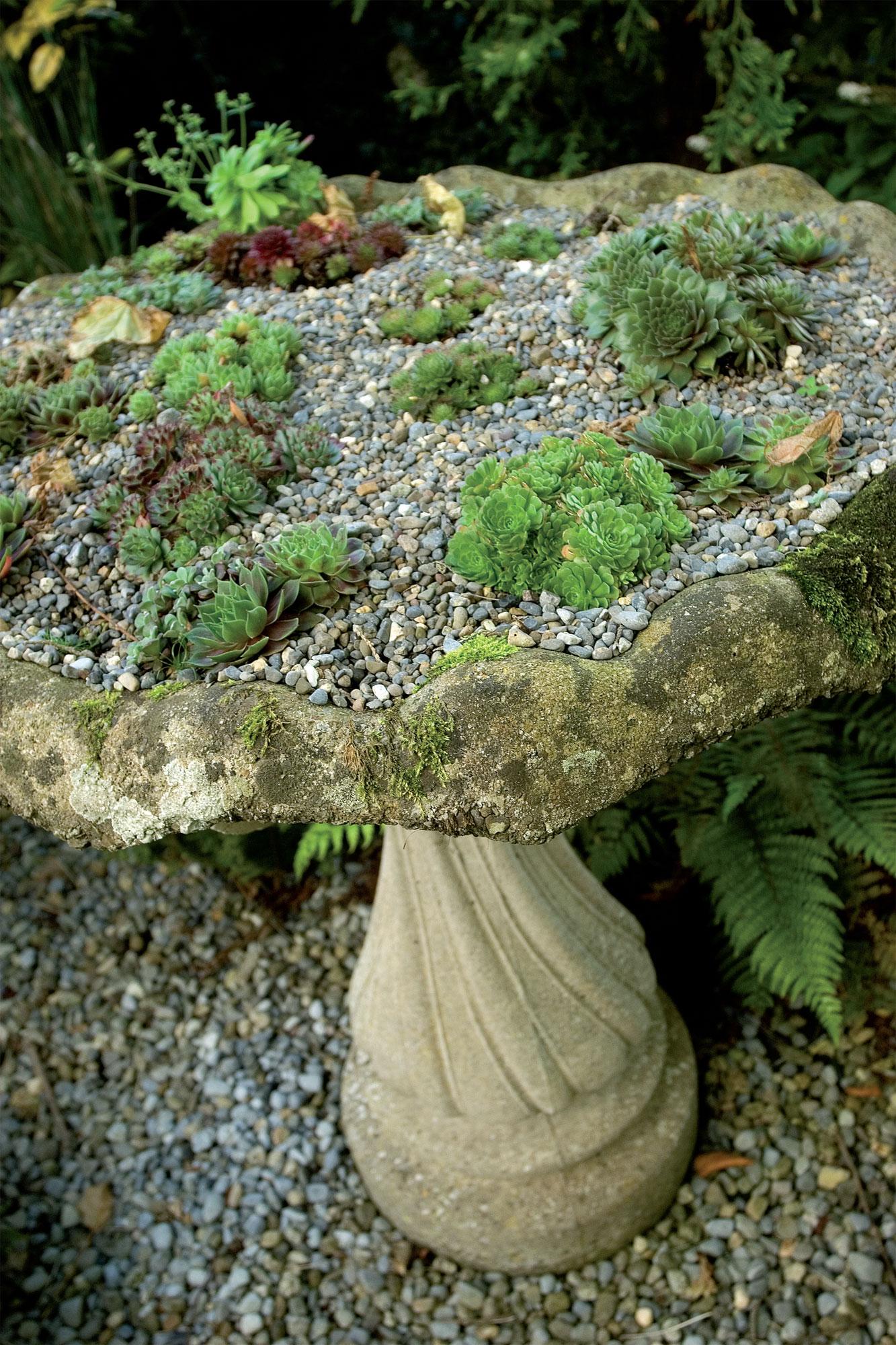 Miniatyyrikivikko erilaisine mehitähtineen (Sempervivum) on perustettu jalallisen kivikaukalon päälle. Nämä suloiset kivikkokasvit viihtyvät, kun kasvualustassa on runsaasti hiekkaa ja soraa. Sora sopii myös katteeksi kasvien välille.